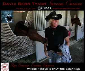 David-Horse-ad-layout