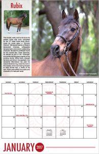 2017 Calendar Spread