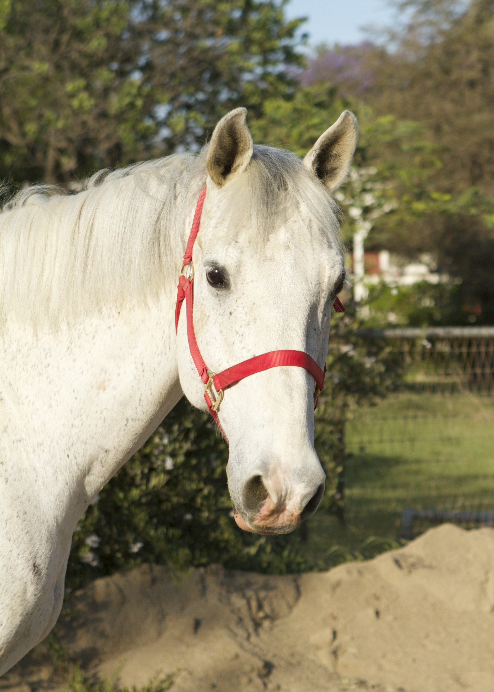 Ready for Adoption – Red Bucket Equine Rescue