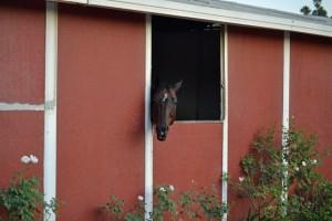 Red Bucket Horse Rescue Gala20151024DSC_3116.JPG0005_edited-1