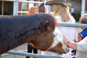 Red Bucket Horse Rescue Gala20151024DSC_3120.JPG0009_edited-1