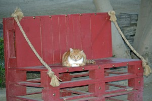 Red Bucket Horse Rescue Gala20151024DSC_3149.JPG0038_edited-1